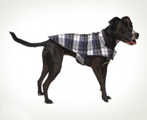 Vermont Flannel Dog Jacket