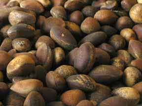 New Mexico Pinon Nut