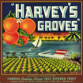 Harvey's Groves Florida Fruit