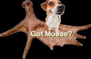 Got Moose Pet Chews