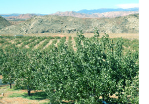 Red Rock Ranch Pistachios