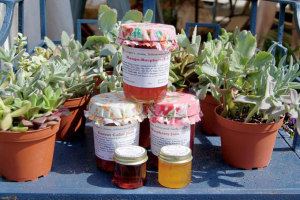 Ginger's Jams & Jellies, Florida