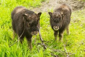 Alaska Wildlife Center StateGiftsUSA.com