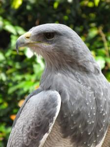 World Center For Birds of Prey StateGiftsUSA.com