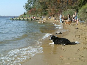 Annapolis Quiet Waters Park Dog Beach StateGiftsUSA.com/made-in-maryland