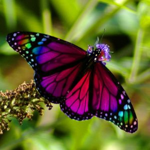 National Learn About Butterflies Day StateGiftsUSA.com