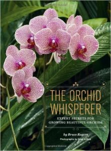 National Orchids Day StateGiftsUSA.com